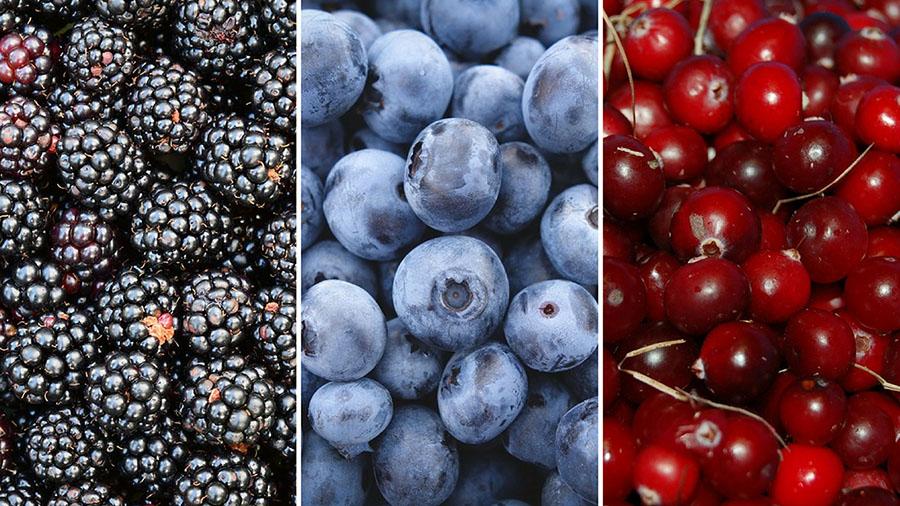 blog-top-5-foods-for-performance-berries.jpg